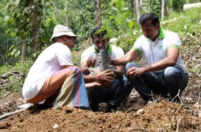Rubber Tree Planting