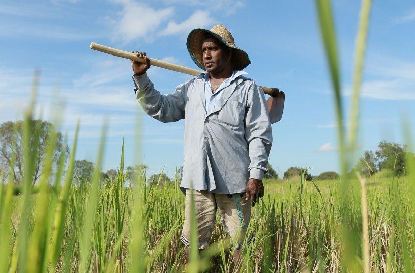 Rice farmer in his paddy field in Monaragala, Sri Lanka