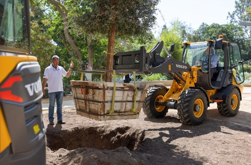 The Volvo L25 Electric compact wheel loader uses a fork attachment to plant a 16-foot-tall, 3,500-pound cork oak tree in the UCLA Mildred E. Mathias Botanical Garden during a press event Tuesday. <br> Image source: Volvo Construction Equipment North America